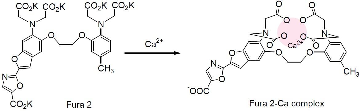 fuoreszenzfarbstoff fura 2 am kalibrierung dissertation