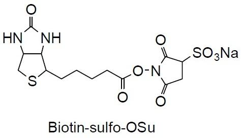 an analysis of biotin 5 united states vitamin h (biotin) manufacturers profiles/analysis 51 dsm 511 company basic information, manufacturing base and competitors.