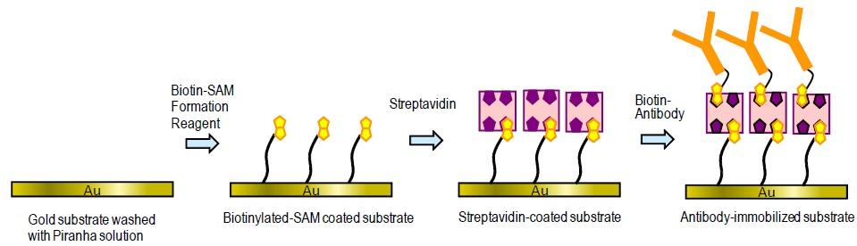 Biotin Sam Formation Reagent Dojindo