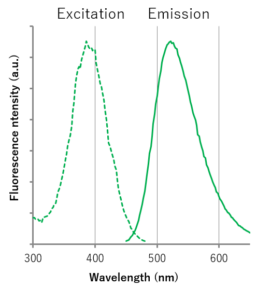Excitation and emission spectra of ECGreen