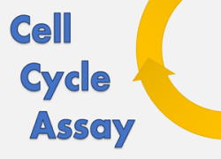 Cell Cycle Assay Solution Blue Cell Cycle, Cell, Cycle, Assay, Blue