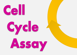 Cell Cycle Assay Solution Deep Red Cell Cycle, Cell, Cycle, Assay, Deep Red