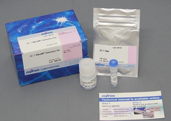 JC-1 MitoMP Detection Kit MT09, Mitophagy Detection Kit, Alzheimers, Parkinsons, Mitochondria Dysfunction, Mitophagy, PINK1, neurogenerative, Keima, fluorescence, mitotracker