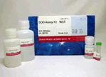 SOD Assay Kit-WST SOD Assay Kit-WST, Superoxide dismutase, ROS, Oxidative stress, Superoxide anion, Radical, NBT, NBT method, SOD1, SOD2, WST-1, IC50, Cu/Zn-SOD, Xanthine, Xanthine oxidase, SOD inhibition activity, Superoxid, NBT