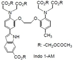 Indo 1-AM Indo 1-AM, 1-[2-Amino-5-(6-carboxy-2-indolyl)phenoxy]-2-(2-amino-5-methylphenoxy)ethane-N,N,N',N'-tetraacetic acid, pentaacetoxymethyl ester [CAS: 112926-02-0]