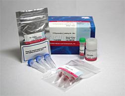 R-Phycoerythrin Labeling Kit-NH2